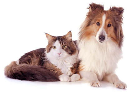Friends - friend, dog, animal, white, caine, pisica, brown, collie, dog and hat, cat, couple