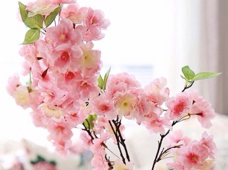 Soft pink flowers flowers nature background wallpapers on soft pink flowers mightylinksfo