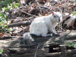 Bianca the White Squirrel Sitting on a Log