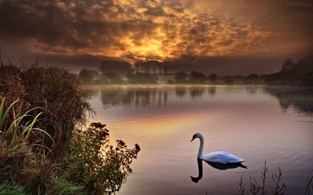 Swan Lake - Lake, Tree, Sky, Nature