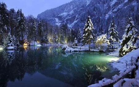 Blausee Lake, Switzerland - snow, night, forest, lights, trees, nature, mountain, lake