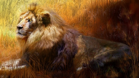 Lion in Dried Grass