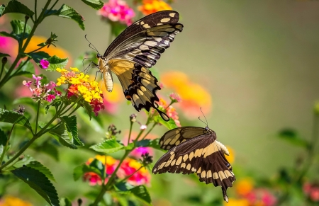 Spring Flowers And Butterfly Butterflies Animals Background