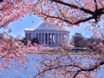 Jefferson Memorial at Spring