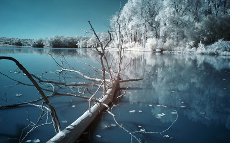 Winter Scenery - snow, winter, nature, ice