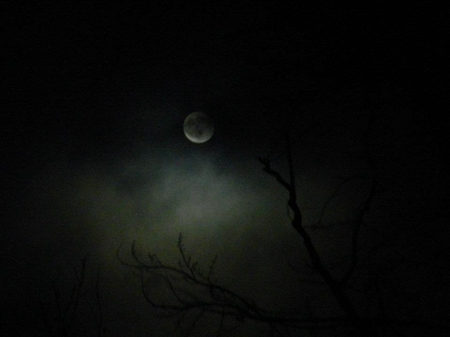 Twilight Moon - Moon, Space, Photography, Sky, Tree