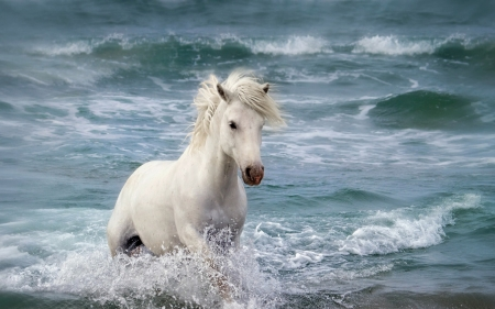 Horse - water, animalsummer, summer, white, horse, animal, sea, blue