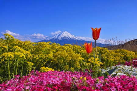 Spring in Japan - Japan, view, beautiful, spring, sky, volcano, freshness, mountain, wildflowers, landscape