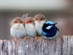 Four little Birds on a Fence