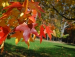 Colored leaves at the Jesuit retreat House forest