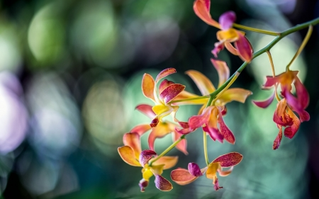 Orchids - bokeh, green, orchid, flower, yellow, pink