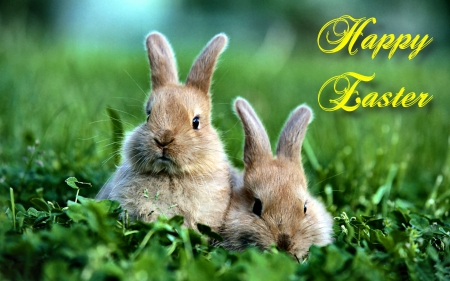 Happy Easter Bunnies - photo, holiday, April, Sunday, beautiful, Easter, photography, wide screen, bunny, occasion, bunnies