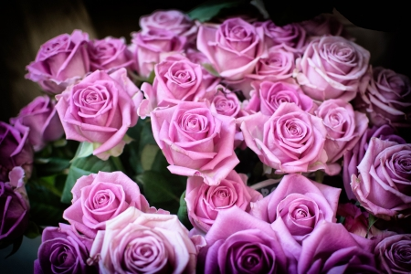 Pink bouquet - roses, buds, bouquet, pink