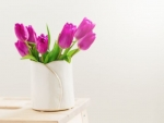 Beautiful Fresh Spring lila Tulips