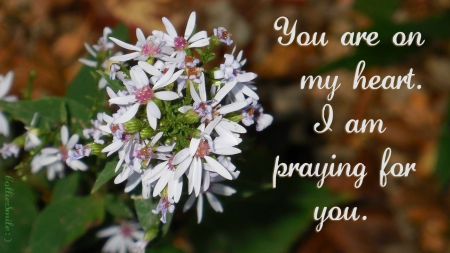 You Are On My Heart & I am Praying...(2) - Christian, praying, concern, bloom, co11ie, prayer, b1ooms, love, praying4u, flower, flowers, prayers, care, sa1vation