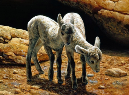 Baby Bighorns - painting, sheep, lambs, artwork