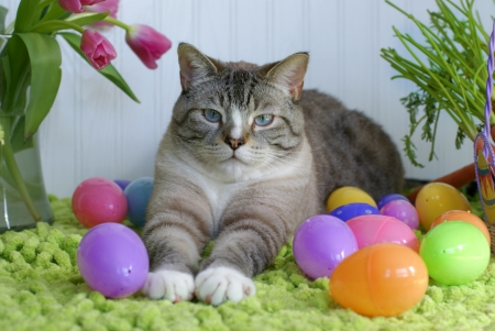 easter and cat - eggs, easter, cat, laying