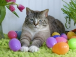 easter and cat