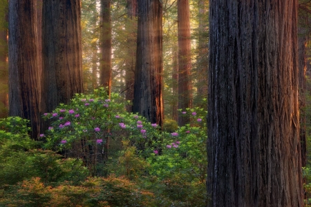 ♥ - forest, trees, nature, sunlight