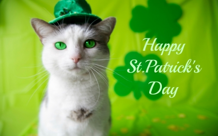 St. Patrick's Day Cat - clovers, St Patricks Day, Saint Patricks Day, green eyes, shamrocks, cat, Patricks Day, hat