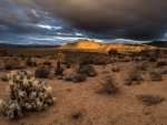 Cloudy Sunset at Joshua Tree National Park