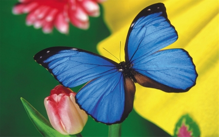 BUTTERFLY - FLOWERS, PETALS, LEAVES, COLORS