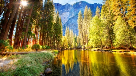 River Bank with Pine Tress - grass, trees, green, pine, mountains, bank, summer, nature, river, reflection
