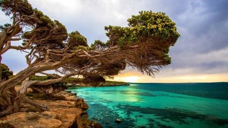 Coastal Tree Port Lincoln South Australia Beaches