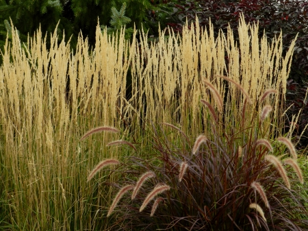 Garden Of Grass - Grass, Photography, Garden, Nature