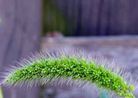 Macro Grass - Macro, Green, Grass, Photography, Nature