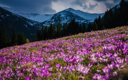Mountains, spring - flowers, spring, mountains, nature