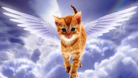 Angel Cat - art, wings, sky, fantasy, angel, cat, painting