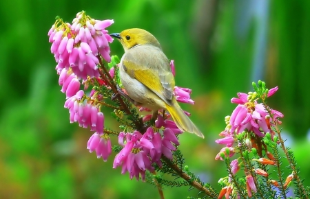 Sweet little Bird - Animal, cute, Flower, Bird