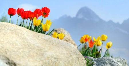 Spring in Tatra Mountains, Slovakia - peak, tulips, landscape, rock, blossoms