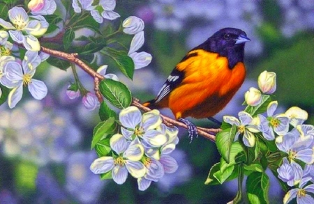 Oriole and Blossoms - garden, paintings, flowers, spring, bird, animals, love four seasons, cherry blossom, nature