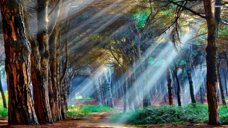 Streaming light - art, light, path, forest, beautiful, trees, nature, painting