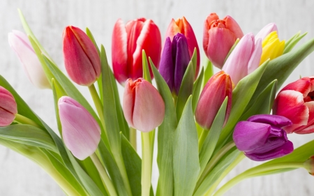 Spring Tulips - pink, tulips, yellow, flowers, red, Spring, purple