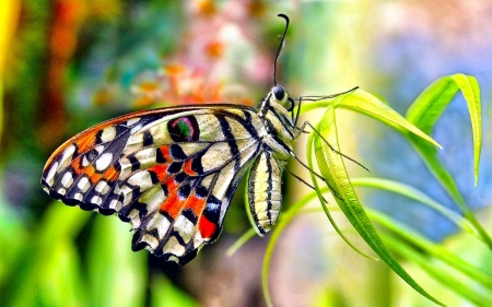 Butterly - grass, insect, Vine, Butterfly