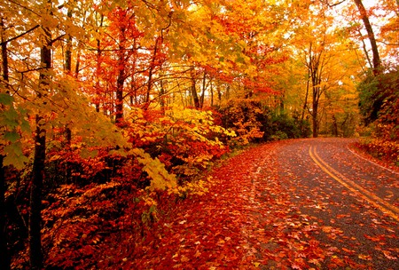 Fallen Leaves - autumn, orange, road, gold, red, trees, leaves