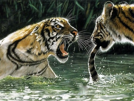 Wild Growl - art, water, tail, growling, tigers, cats