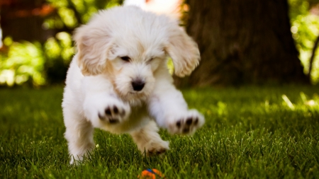 Little Dog Play In The Wood - grass, ground, wood, puppy, dog, animal, play