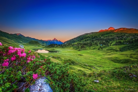 Alpine roses - Alps, grass, greenery, flwoers, beautiful, roses, sky, lake, freshness, pond, mountain, meadow