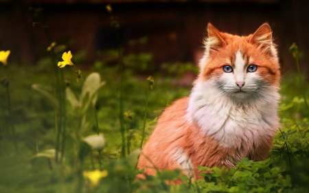 Cat - green, orange, summer, beauty, cat, animal, pisica