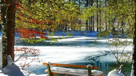 Rest Near Frozen Lake - snow, frost, winter, park, forest, rest, trees, lake, nature, pond