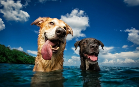 Dogs - cloud, caine, breath, sky, tongue, animal, water, summer, funny, couple, blue