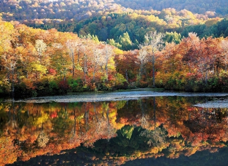 Autumn Reflection - scenery, forest, japan, reflection, nature, autumn, japanese, lake