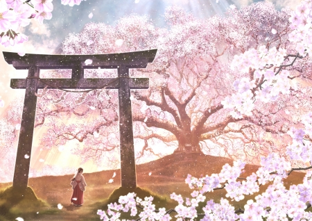 Sakura Dream Other Anime Background Wallpapers On