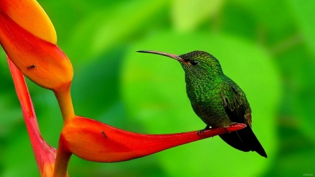 beautiful bird - flower, red, bird, green