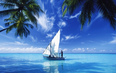 sailing over indian ocean - ocean, boat, indian, tree