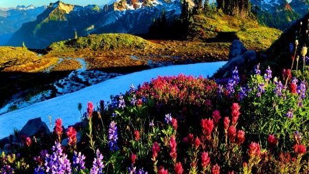 Blue Mountain River - mountain, riverbank, shore, bright, nature, river, floral